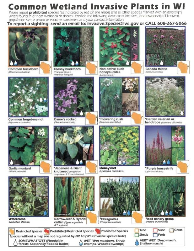 Common Invasive Plants in WI
