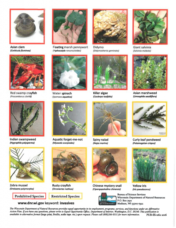 Selected Regulated Aquatic Invasive Species in WI - page 2